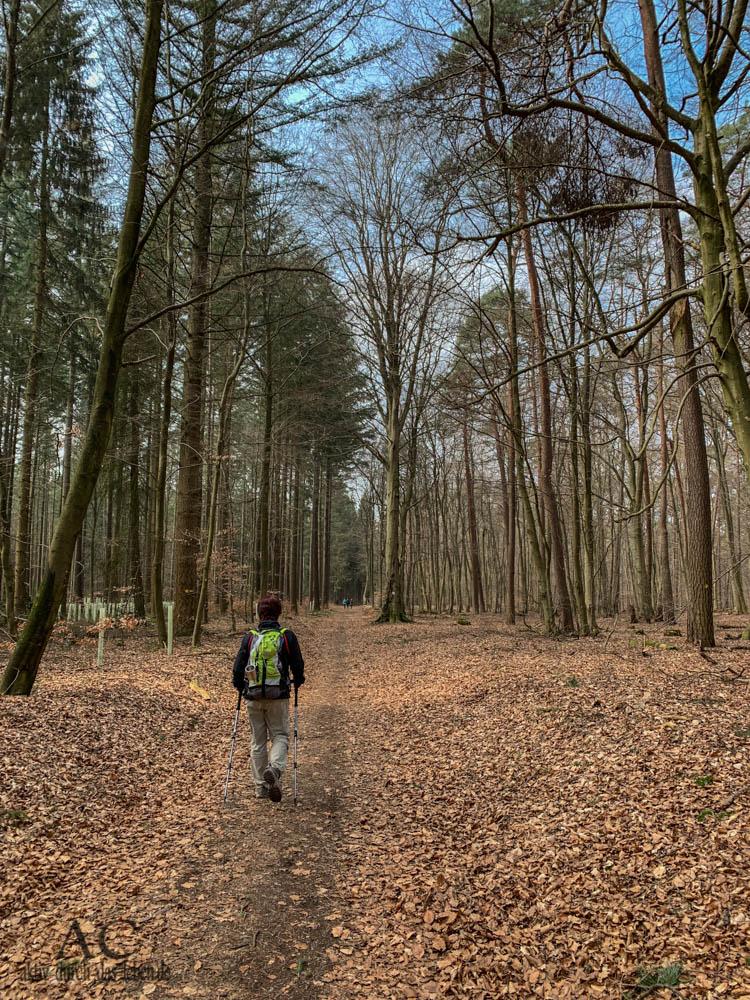 Hinkelsteinweg Wandermarathon 2019