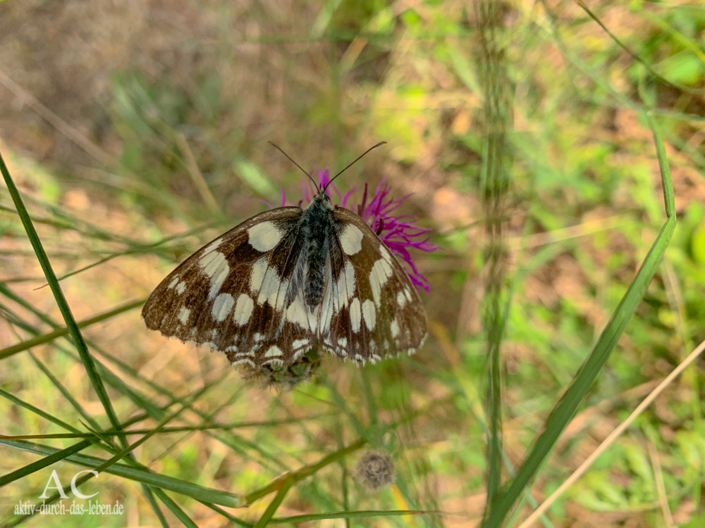 Schmetterling am Nahesteig